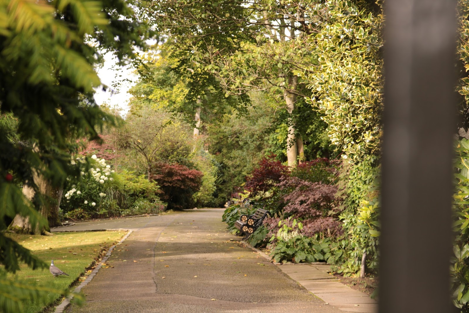 A morning in the garden. | Johnston Gardens, Aberdeen - imemmajack