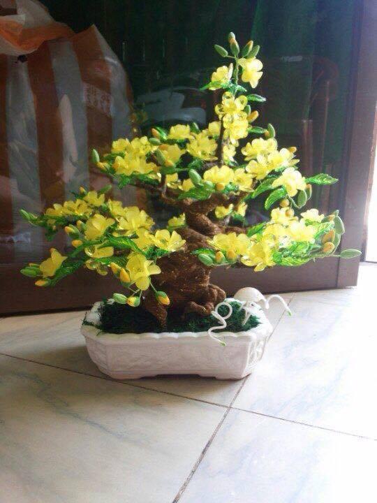 Goc bonsai mai dao o Hai Ba Trung