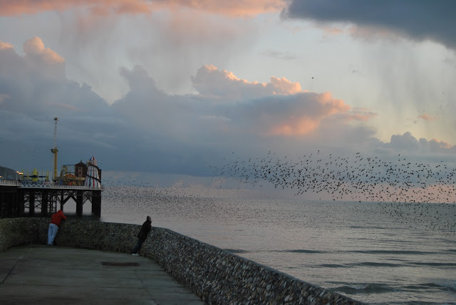 Brighton Pier murmuration 2016, photo by modern bric a brac