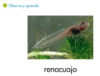 http://primerodecarlos.com/SEGUNDO_PRIMARIA/tengo_todo_4/root_globalizado4/libro/6169/ISBN_9788467808803/activity/U05_179_01_AI/visor.swf