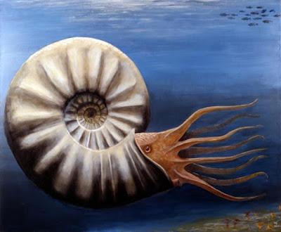 cretaceous invertebrata
