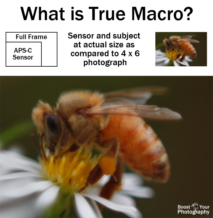 What is True Macro Photography? | Boost Your Photography