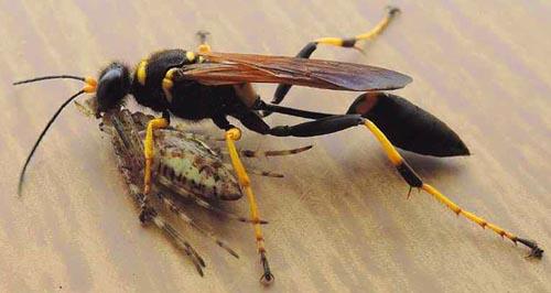Nico valerio animali in casa vespa vasaio ama i libri for Formiche volanti in casa