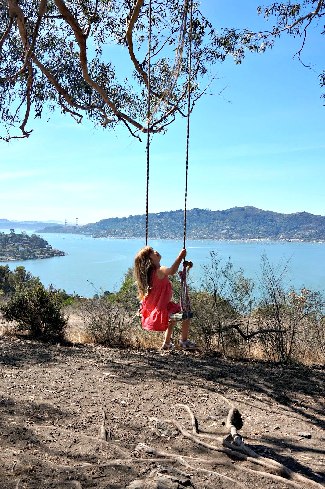 If You Re Looking For A Really Short Hike That Leads To Some Of The Best Views In Bay Area And An Awesome Rope Swing Then Look No Further Hippie Tree