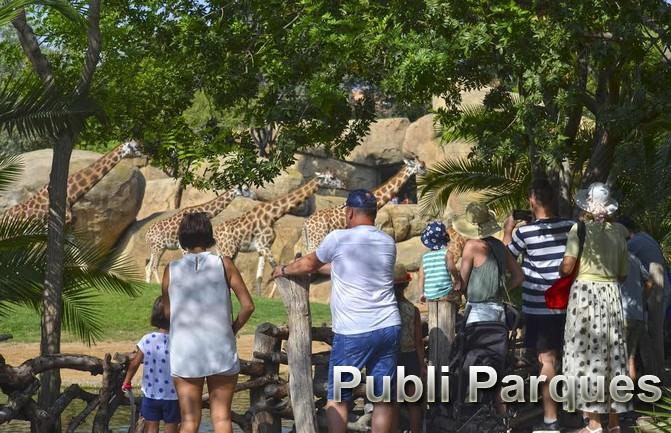 Visitantes observando las jirafas en Bioparc