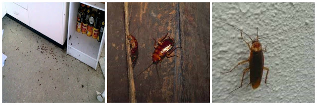 انواع الحشرات المزعجة والضارة بمنزلك %D9%85%D9%83