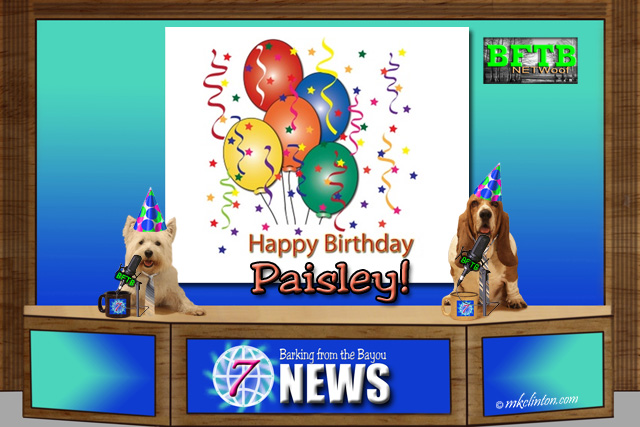 BFTB NETWoof News celebrates Paisley's 2nd birthday