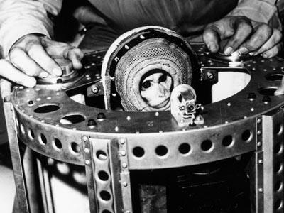 Dış Uzaya Başarıyla Giren İlk Primat: Albert II
