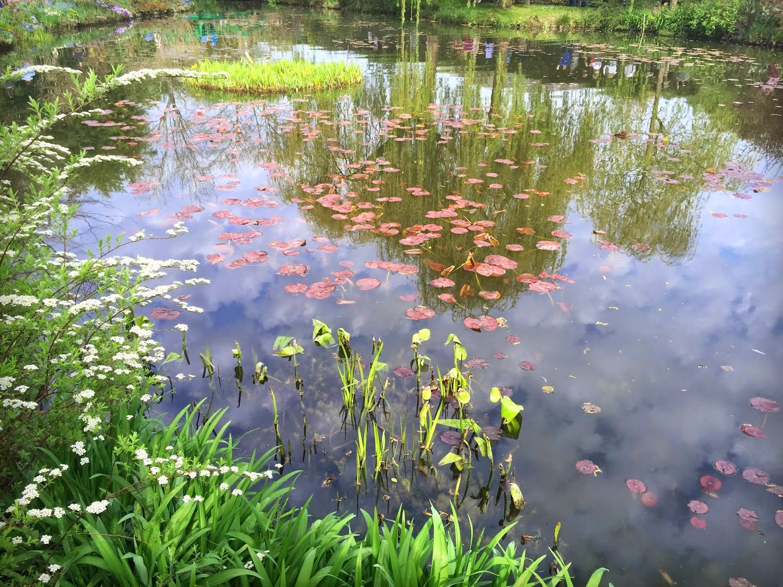 Water lilies in the pond, Giverny, mid April
