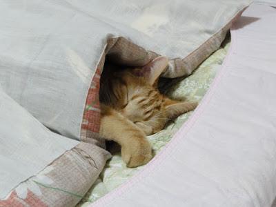 猫が布団に入っています。布団から顔が出しています。