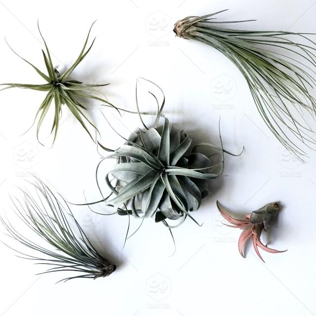 Plantas del aire: las Tillandsias.
