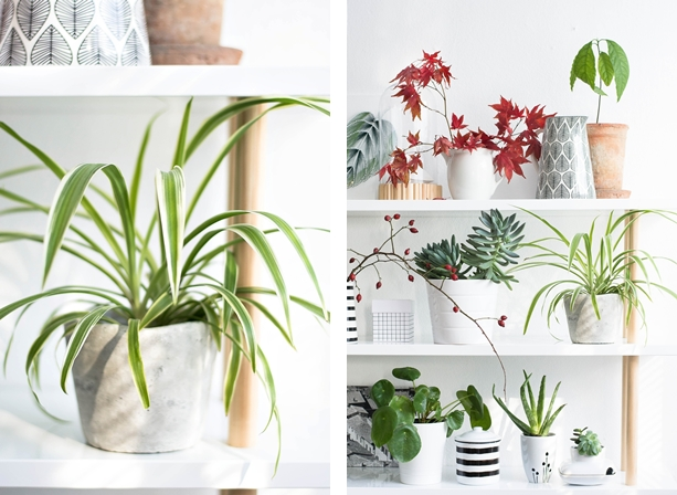 urban jungle bloggers plantshelfie sinnenrausch der kreative diy blog f r wohnsinnige und. Black Bedroom Furniture Sets. Home Design Ideas