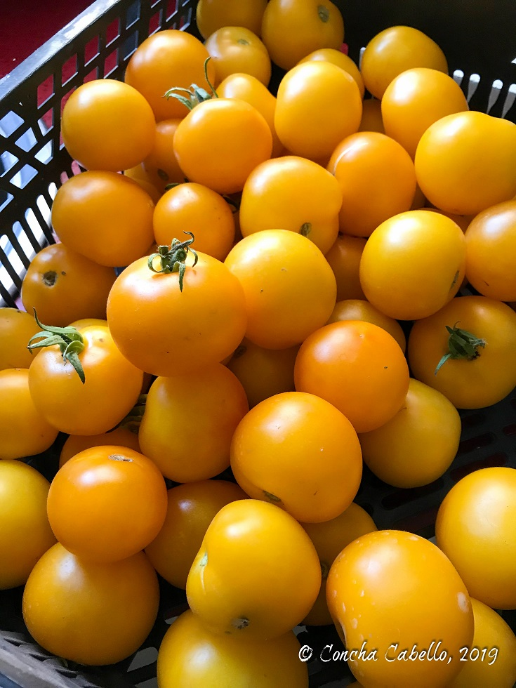 tomates-amarillos-ecológicos