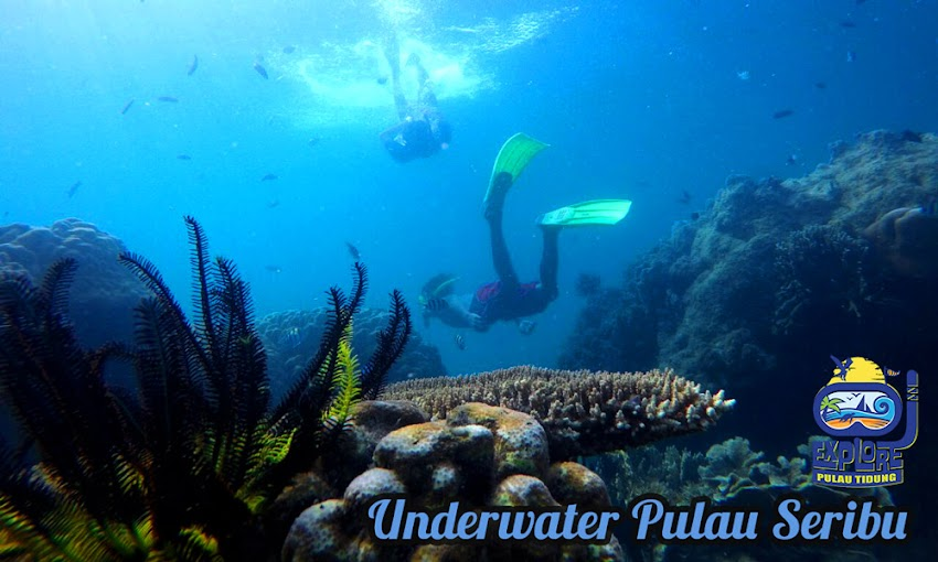 wisata bahari di pulau tidung