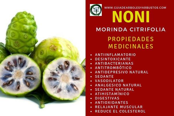 El Noni tiene Propiedades Medicinales como antiinflamatorias, desintoxicante, etc
