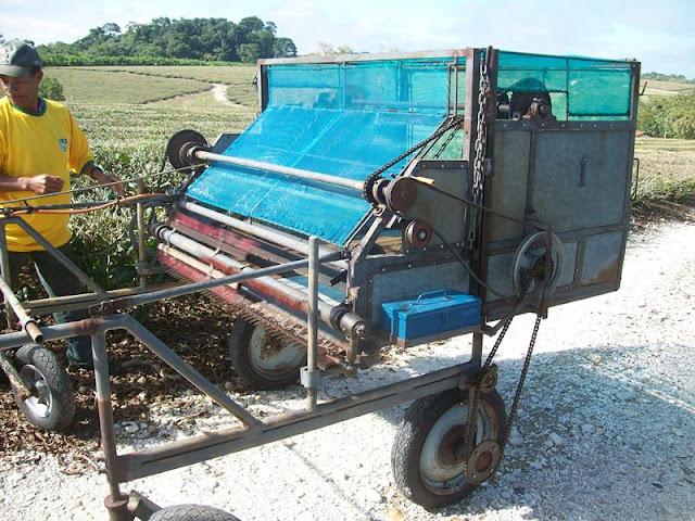Maquina para colher Chá