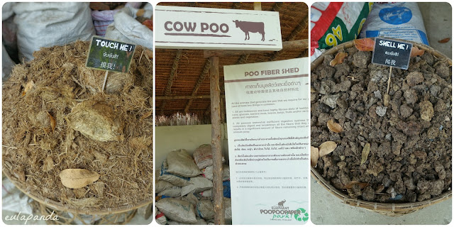 poo paper, elephant poo, dung, elephant, chiang mai, Thailand