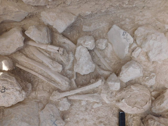Middle Minoan grave sites discovered in Petras, NE Crete