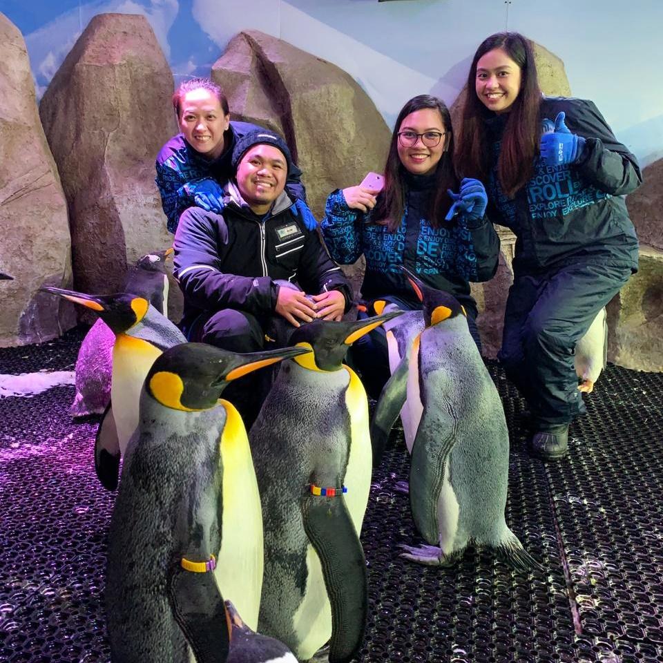 Ski Dubai Penguin Encounter 2