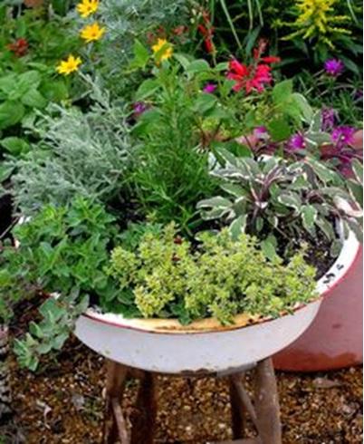 Baskom yang sudah berkarat dan berlubang bisa dimanfaatkan jadi pot bunga