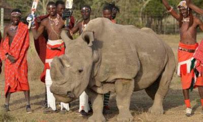 Último rinoceronte blanco Sudan