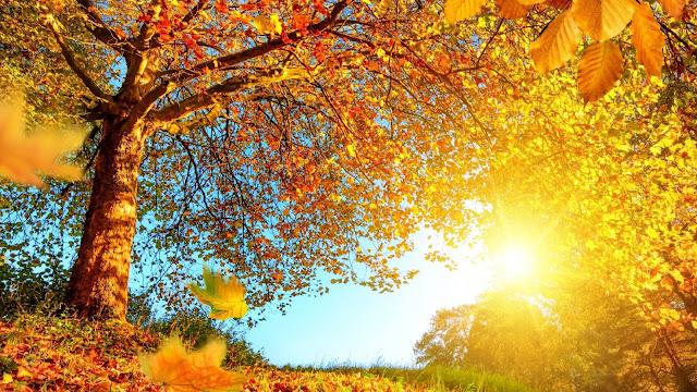 Herfst landschap in oranje kleuren.