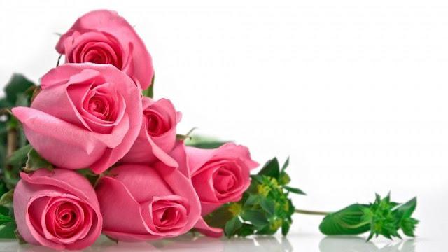 hình ảnh hoa đẹp nhất thế giới 16