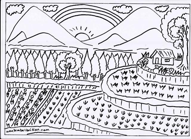 15. Gambar Sawah-Sawah Bersusun Terasering, Hutan Cemara Dan Pegunungan