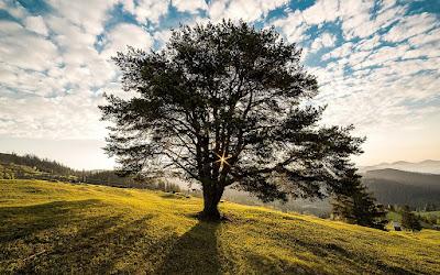 The wsih-granting tree