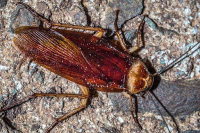 dirty random Facts About Cockroaches