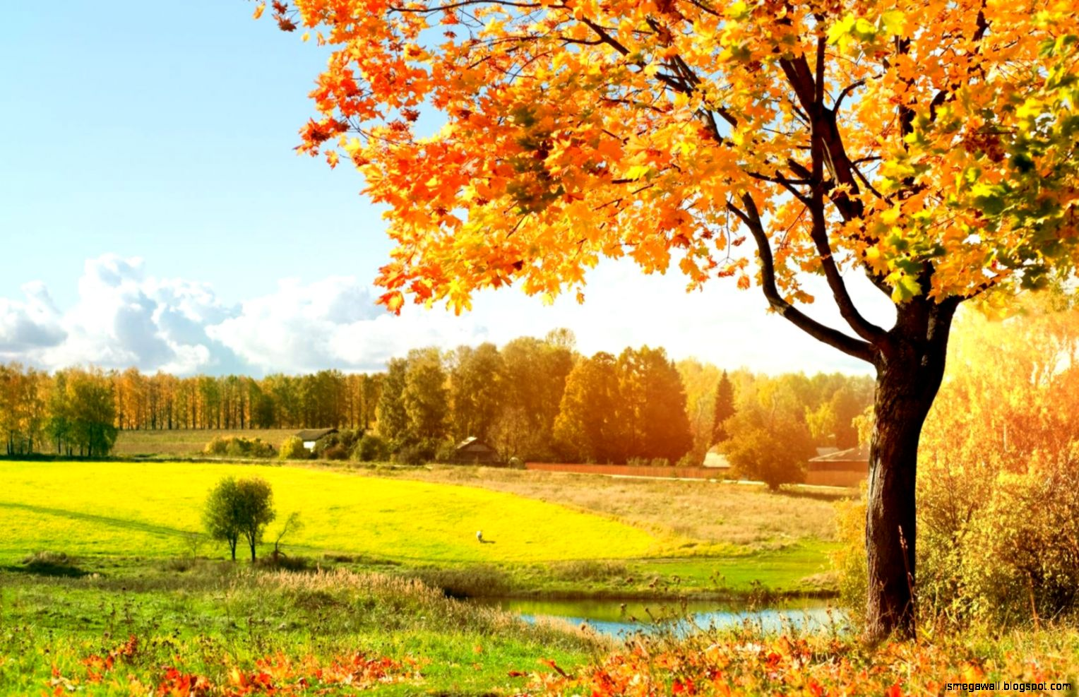 Autumn Wallpaper Hd Widescreen