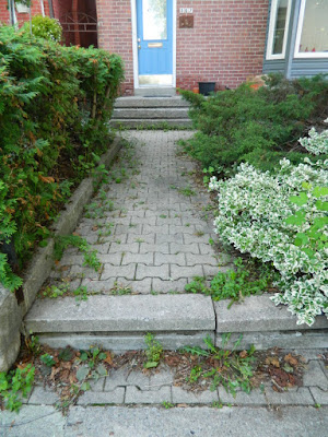 Riverdale Toronto Garden Cleanup Before by Paul Jung Gardening Services--a Toronto Gardening Company