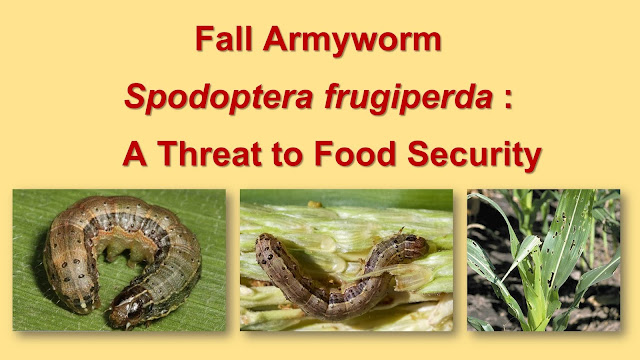 Fall Armyworm Spodoptera frugiperda : A threat to food security