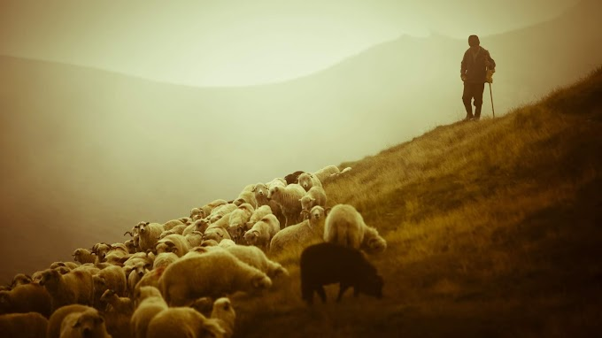 Salmo 23: Ungiendo las ovejas