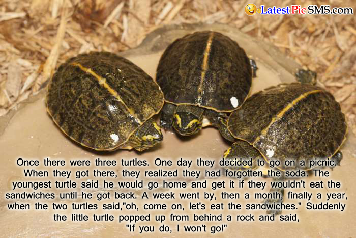 three turtle jokes - SMS of The Day in English with Pictures for Whatsapp & Facebook