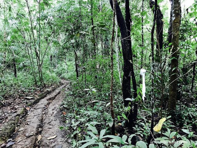 Trekking%2BTa%2BNang%2BPhan%2BDung - Cung đường trekking Tà Năng - Phan Dũng ngày trở lại, mùa mưa 2016