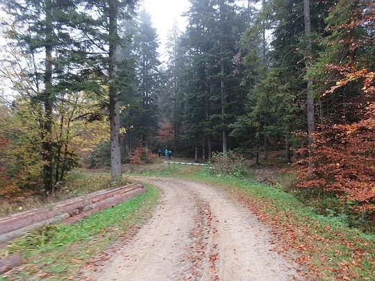 Odejście szlaku z drogi leśnej.