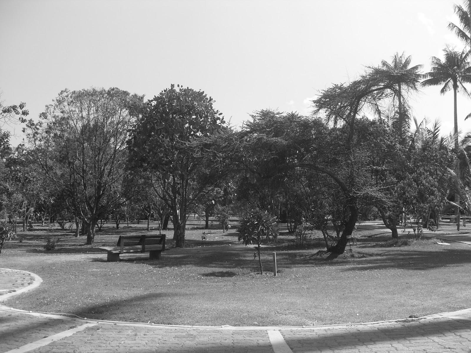 Imago y jard n bot nico en blanco y negro 2016 for Jardin botanico 2016