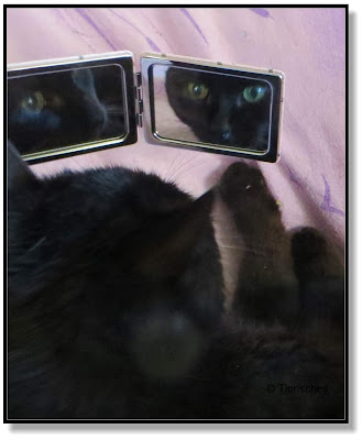 Rambo im Spiegel