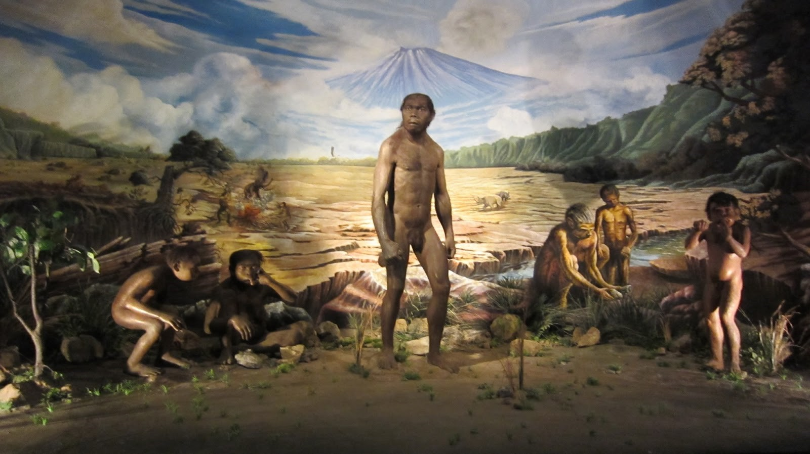 Image result for museum manusia purba sangiran solo