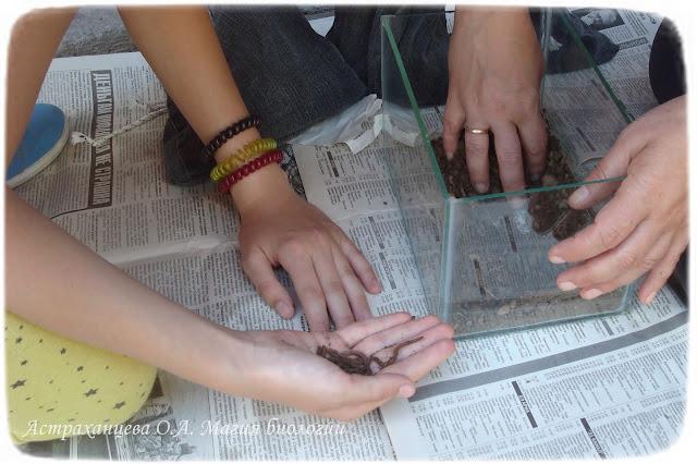 изучение дождевых червей