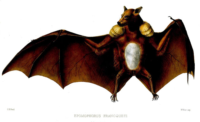 चमगादड़ से जुड़े कुछ ऱोचक तथ्य | Facts about Bat