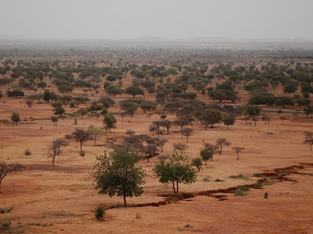 Warmer Mediterranean turns the Sahel green