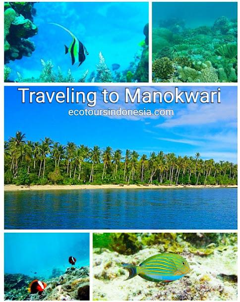 coral reef and fish in Manokwari