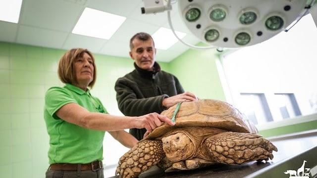 Jön a különleges állatleltár a Veszprémi Állatkertben