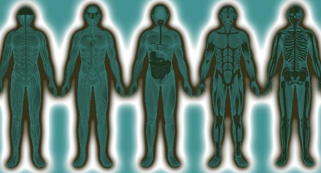 Biomedicina e Fisiologia