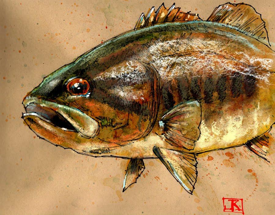 Drawing Fish 52 26 Smallmouth Bronzeback Bass