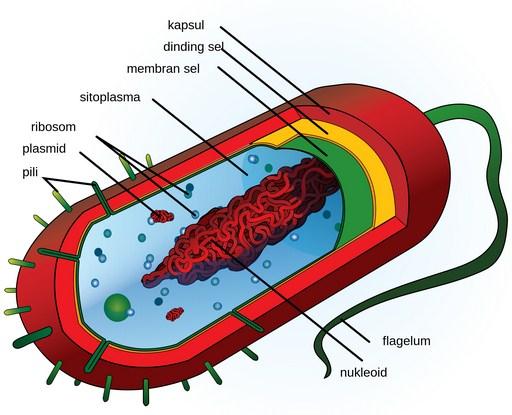 Pengertian Sel dan Bagian Struktur Sel