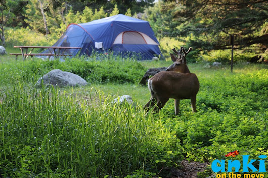 Anki On The Move: Glacier National Park | First Come First Serve Camping and More