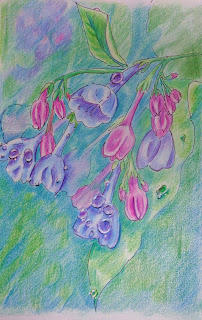 http://possumpatty.blogspot.com/2016/03/breakfast-bluebells-with-dew-drops.html